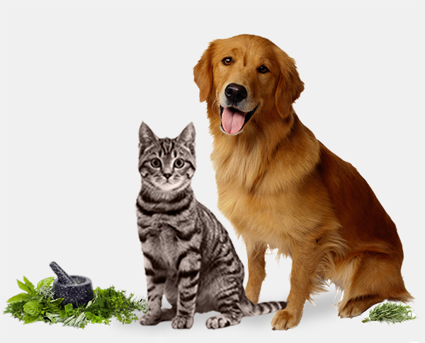 Chats & Chiens